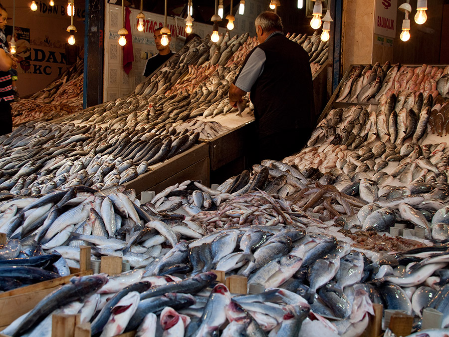 Sea of fish - Fish market in Adana